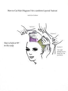 Diagram for a Uniform Layered Hair Cut