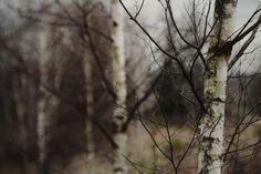 Bland tysta kullar och dystra slätter - XVII, XVIII, XIX, XX © Heathen Harnow - please do not remove credit Wicca, Over The Garden Wall, Southern Gothic, Spring Awakening, Walk In The Woods, John Muir, Red Riding Hood, Wilderness, Winter