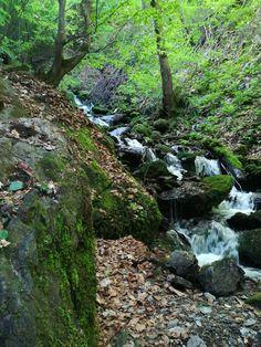 Der Weg ist das Ziel: Über den Schluchtenweg zum Ossiacher Tauernteich - kärnten Thomas Bernhard, Plants, Blog, Goal, Landscape, Life, Blogging, Plant, Planting