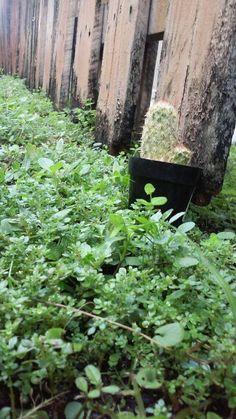 Land Photo Finder, Herbs, Plants, Herb, Plant, Planets, Medicinal Plants