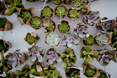 Piękny ślub plenerowy – Promnice, Fotografia: BAUABAN FOTOGRAFIA Tapas, Succulents, Plants, Wedding, Fotografia, Valentines Day Weddings, Succulent Plants, Plant, Weddings