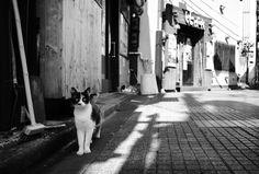 Street cat in Tokyo. Photo by Shiro Yamashita @東京猫色