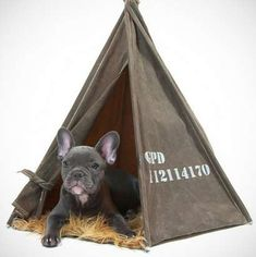 Canine Camper Beds...that's to cute!