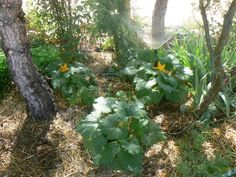High desert permaculture I recently visited Meadview Realtor Jan's permaculture garden, although she just decided to plant trees, bushes and perennials and to then interplant the annual veggies because it make…