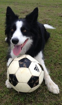 Game of football for anyone? sweet matching black and white dog and football
