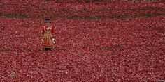 UK falls silent for two minutes as UK marks #ArmisticeDay http://bbc.in/1oFJXXB