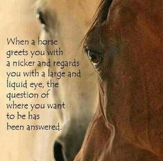 The journey of horse love .never ends. Pretty Horses, Horse Love, Horse Girl, Beautiful Horses, Majestic Horse, Beautiful Eyes, Yorkies, Inspirational Horse Quotes, Horse Riding Quotes