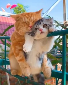 Cat's life – funny cats Cute Kittens, Cats And Kittens, Funny Cat Memes, Funny Cat Videos, Memes Humor, Funny Cats, Cute Funny Animals, Cute Baby Animals, I Love Cats