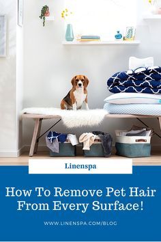 Is your dog shedding so much you can make a second dog with all the hair? We've been there. That's why we made the ultimate list on how to get rid of all that annoying fur! Pet Hair Removal, Dog Shedding, Best Mom, Home Decor Accessories, Parenting Hacks, Make It Simple, Rid, Your Dog, Essentials