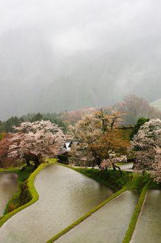 Rice paddies Japan