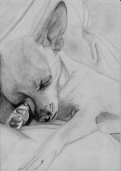 Sleeping Chihuahua by DavidASmith