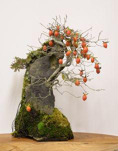 老鴉柿(老爺柿、姫柿)の石付盆栽 Old Crow Persimmon (Princess Persimmon) bonsai on a rock 2013.11.23 撮影