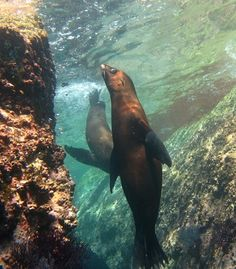 """La Paz sea lion."" (From: 40 Unbelievable Underwater Snapshots)"