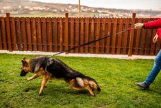 Mismuris Dog Leash
