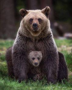 "beautiful-wildlife: ""Family Portrait by © Dmitry Arkhipov "" - Tiere - Chien Cute Baby Animals, Animals And Pets, Funny Animals, Baby Pandas, Strange Animals, Nature Animals, Photo Animaliere, Interesting Animals, Love Bear"