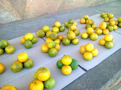 Mandarines de Mayotte