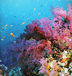 coral reef inspiration
