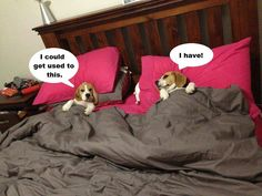 This is what your dogs do all day when you are not home!