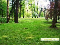 Park MIEJSKI – zielona przestrzeń w środku miasta. |
