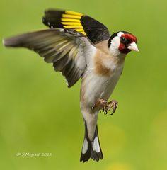 All Birds, Little Birds, Exotic Birds, Colorful Birds, Beautiful Birds, Animals Beautiful, Super Cute Animals, Bird Artwork, Wild Creatures