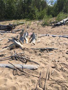 Great Slave Lake beach find