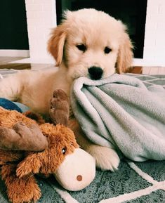 Facts On The Friendly Golden Retriever Pup Super Cute Puppies, Baby Animals Super Cute, Cute Baby Dogs, Cute Little Puppies, Cute Dogs And Puppies, Cute Little Animals, Cute Funny Animals, Doggies, Funny Pets