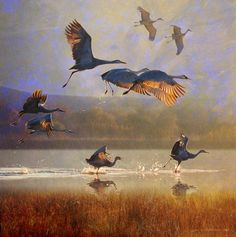 """""""sunrise on the marsh  sandhill cranes"""" by R Christopher Vest, Dolores, Colorado // another for the bosque series. these guys have dispersed from their wintering grounds on the rio grande river and have migrated to various points like the niobrara river in nebraska. it's always amazing to see them by dawn's light. // Imagekind.com -- Buy stunning fine art prints, framed prints and canvas prints directly from independent working artists and photographers."""