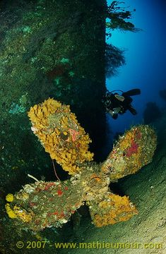 Large propeller of the Molas Wreck, encrusted in sponges and corals / Indonesia