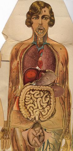 Medical Art, Medical History, Anatomy Art, Human Anatomy, Illustrations Médicales, Medical Illustrations, Medical Anatomy, Up Book, Anatomy And Physiology