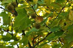 フォト - Google+ Plant Leaves, Art Photography, Autumn, Fruit, Amazing, Google, Plants, Fall, The Fruit