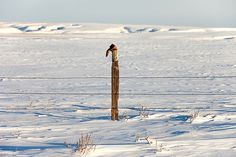 a lonely cowboy boot perched atop a wooden fence post out in the middle of snowy Montana