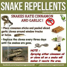 As if I'm ever going to get close enough to a snake to this! We have 2 of the world's deadliest snakes who would NOT appreciate a puff of clove oil Snake Repellant, Natural Fly Repellant, Emergency Preparedness Kit, Survival, Essential Oil Bug Spray, Bug Spray Recipe, Fire Ants, Flea Spray, Cinnamon Oil