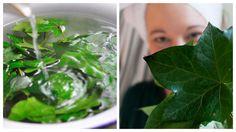 Naturkosmetik aus Efeu selber. Haarspülung, Deo, Waschmittel und sogar eim wirksames Öl gegen Cellulite. Das alles kann man aus Efeu aus dem Garten machen.