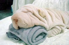 It's ok, your towel is still there