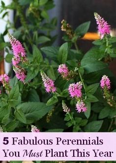 Five fabulous perennials to plant in your garden this year - and fall is prime planting time!