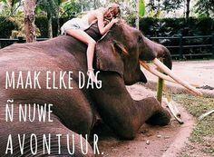 The elephant looks so happy I just had to keep this Wanderlust Travel, Adventure Awaits, Adventure Travel, Elephas Maximus, Safari, Road Trip, Elephant Love, I Want To Travel, Fauna