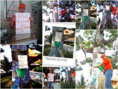 Nuestra Moda Patriótica, Debe Ser Verdes, Adopta y apadrina un árbol
