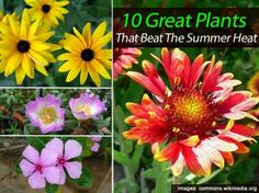 10 Great Plants That Beat The Summer Heat
