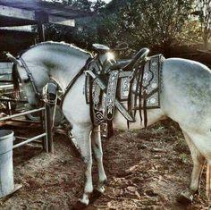 Beautiful Horse and Saddle