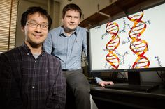 DNA molecules directly interact with each other based on sequence, study finds