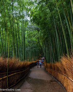 I am not good with words. But I hope the pictures I took speak enough words to describe the beauty of our world. 😅 . . . #arashiyama #bamboo #kyoto #travelphotography #photography #travel #travelgram #instatravel #igs_world #ig_greatshots #ig_great_pics #ig_masterpiece #ig_great_shots #ig_global_life #ig_mood #beautifuldestinations #worlderlust #wanderlust #borntotravel #pro_ig #igglobalclub #earthpix #ig_captures #wonderfulplaces #ig_sharepoint #ig_worldclub #fantastic_earth…
