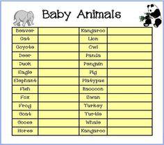 Baby Animal game