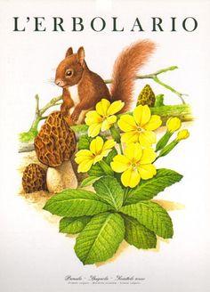 Calendario 1996, animali e piante del bosco: primule, elleboro, equiseto, arnica, tarassaco, insieme a lepri, volpi, ricci, caprioli, codirossoni