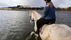 November Hard not to take advantage of the fine weather. Another dip in the ocean again today for Comanche, Jazz, Freddy and Sierra. If Sierra was . Riding Holiday, Beach Rides, November 9th, Horses For Sale, Show Jumping, Beach Babe, Cob, Horse Riding, Jazz