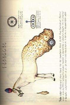 """codex seraphinianus late 70s italian architect, illustrator and industrial designer luigi serafini made a book, an encyclopedia of unknown, parallel world. it is written in an unknown language, using an unknown alphabet. it took him 30 month to complete that masterpiece that many might call """"the strangest book on earth"""". codex seraphinianus."""