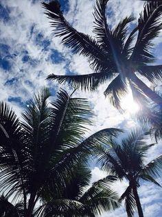 Luxury palms