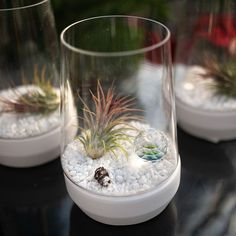 Beautiful Tillandsia make amazing terrarium friends!! Where would you put this one?? 😍 $44.99 in-store exclusive  at West Coast Gardens in Surrey BC. Near Vancouver, Port Moody, White Rock, Port Coquitlam and Burnaby.  www.westcoastgardens.ca #indoorplants #houseplants