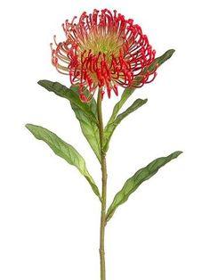 Needle Protea Stem