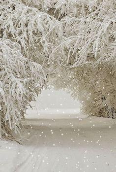 ✼ ✼ ✼ ✼ Winter