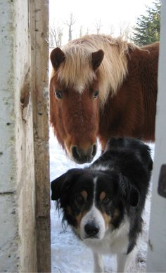 Photo from the Hucklebones blog. Hucklebones is the name of the pony. Isn't he the sweetest thing? Both he and the dog look like something out of a children's story.